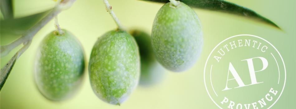 slide-olive-t